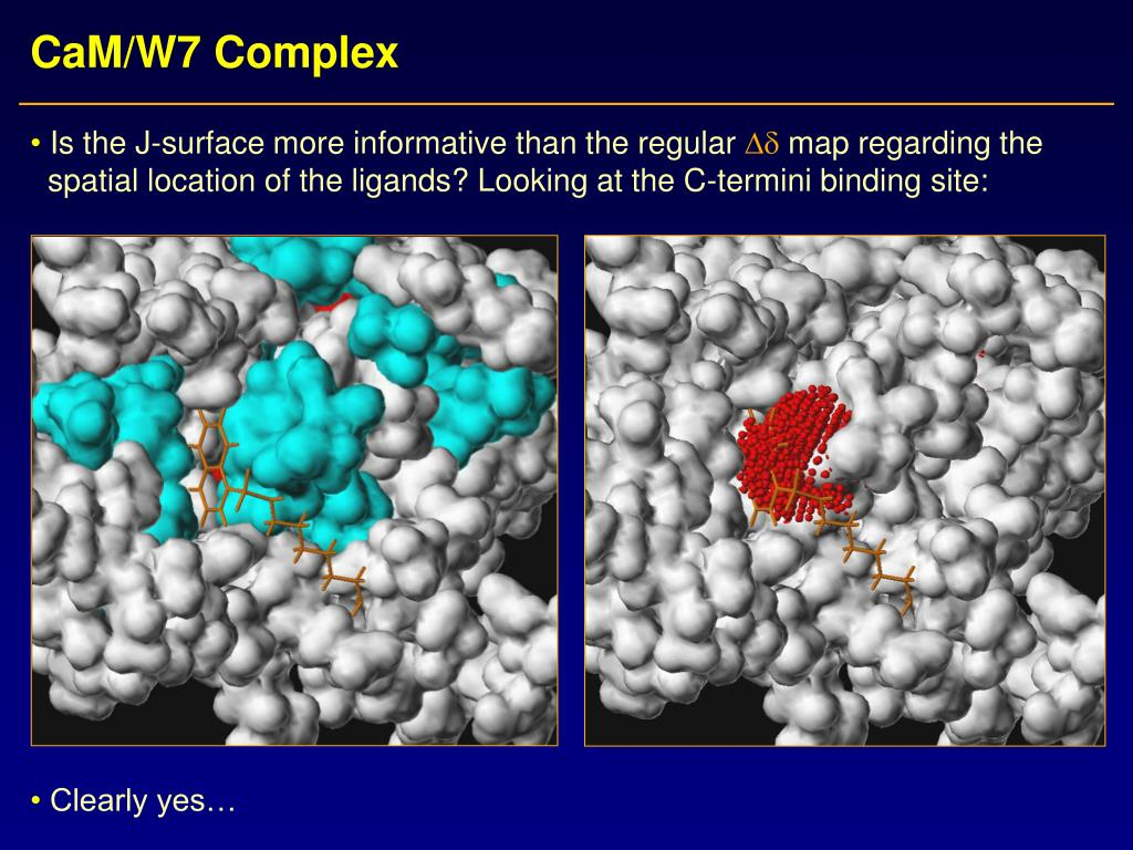 CaM/W7 Complex