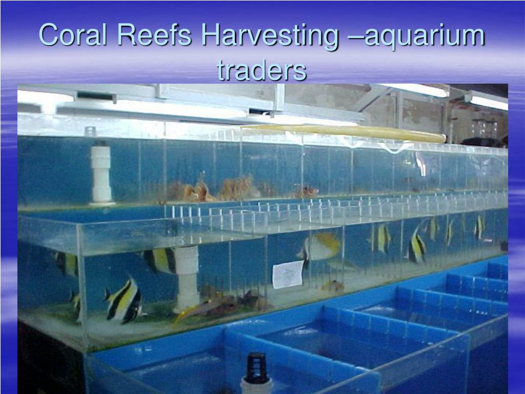 Coral Reefs Harvesting –aquarium traders