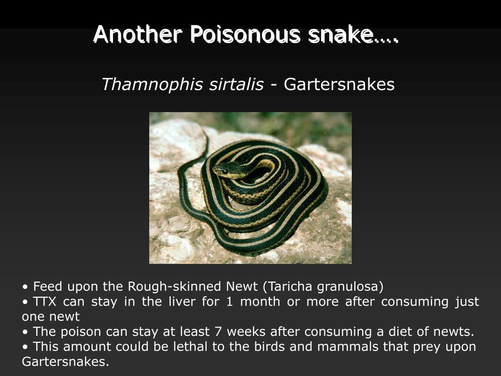 Another Poisonous snake….