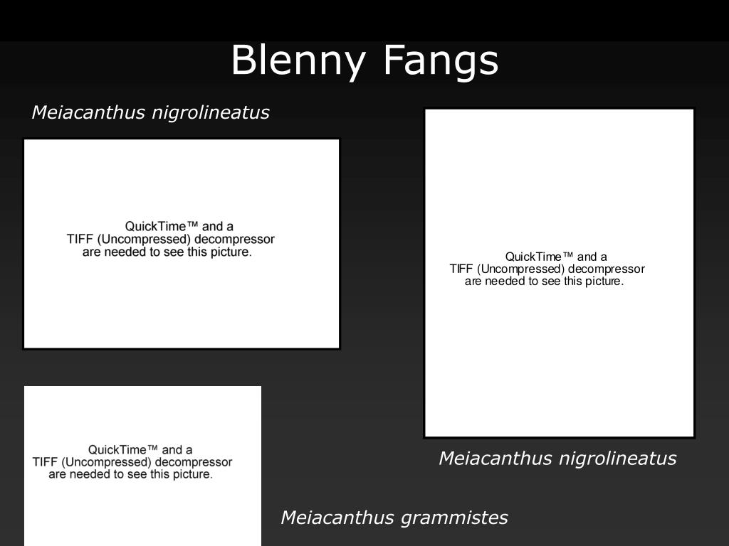 Blenny Fangs