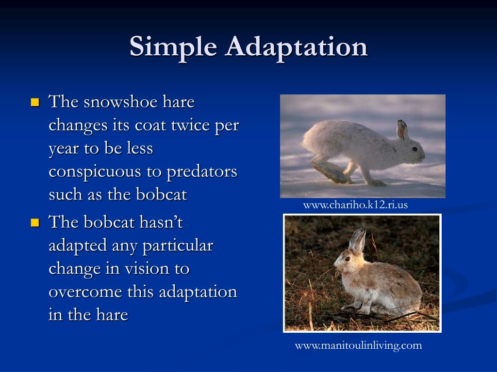 Simple Adaptation