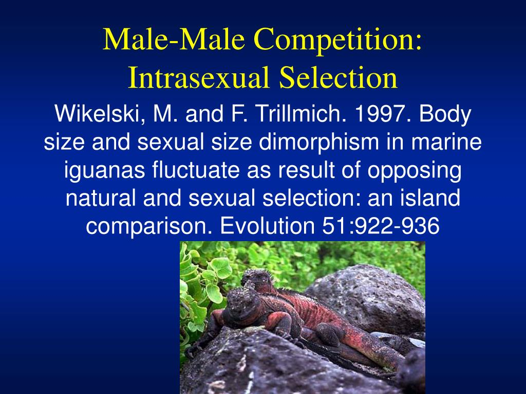 Male-Male Competition: Intrasexual Selection