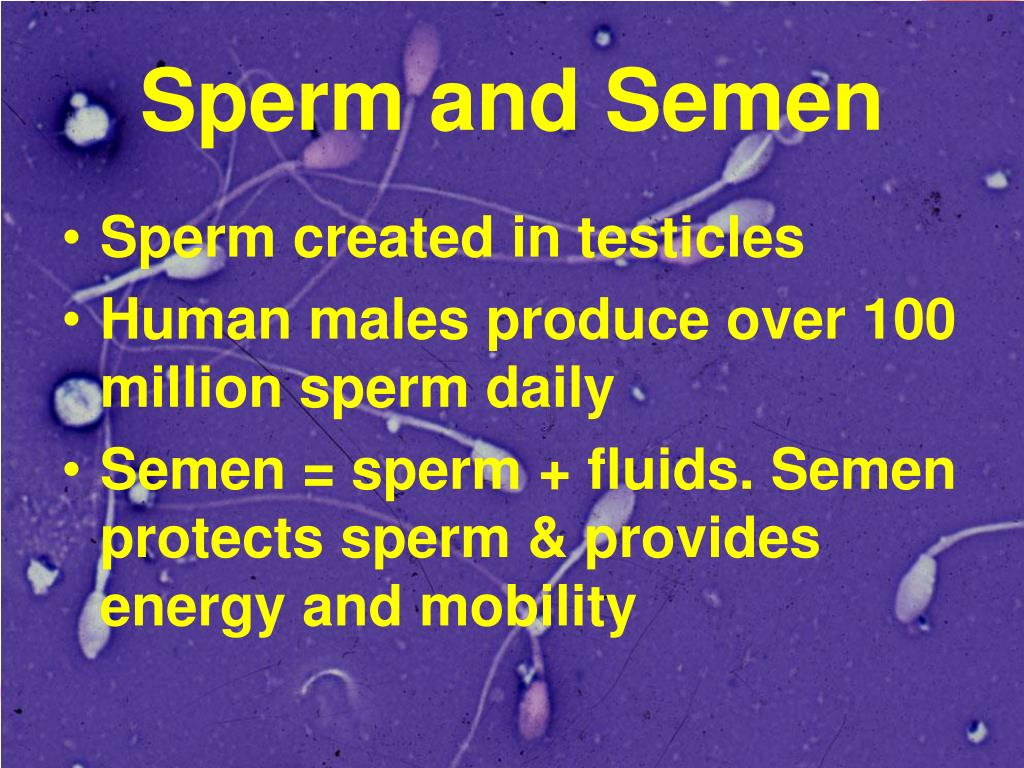 Sperm and Semen