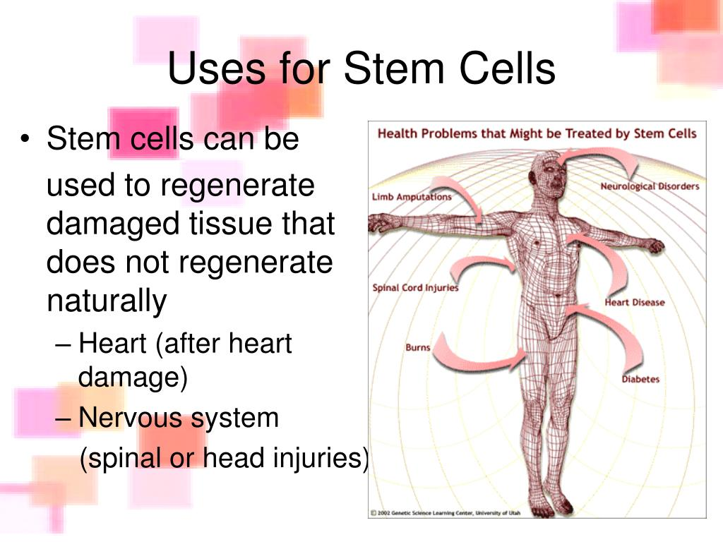 Uses for Stem Cells