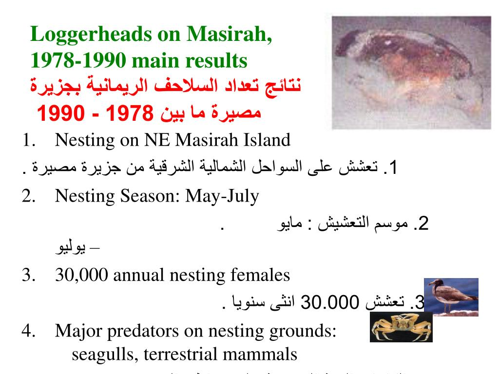 Loggerheads on Masirah,