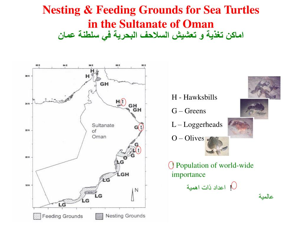 Nesting & Feeding Grounds for Sea Turtles