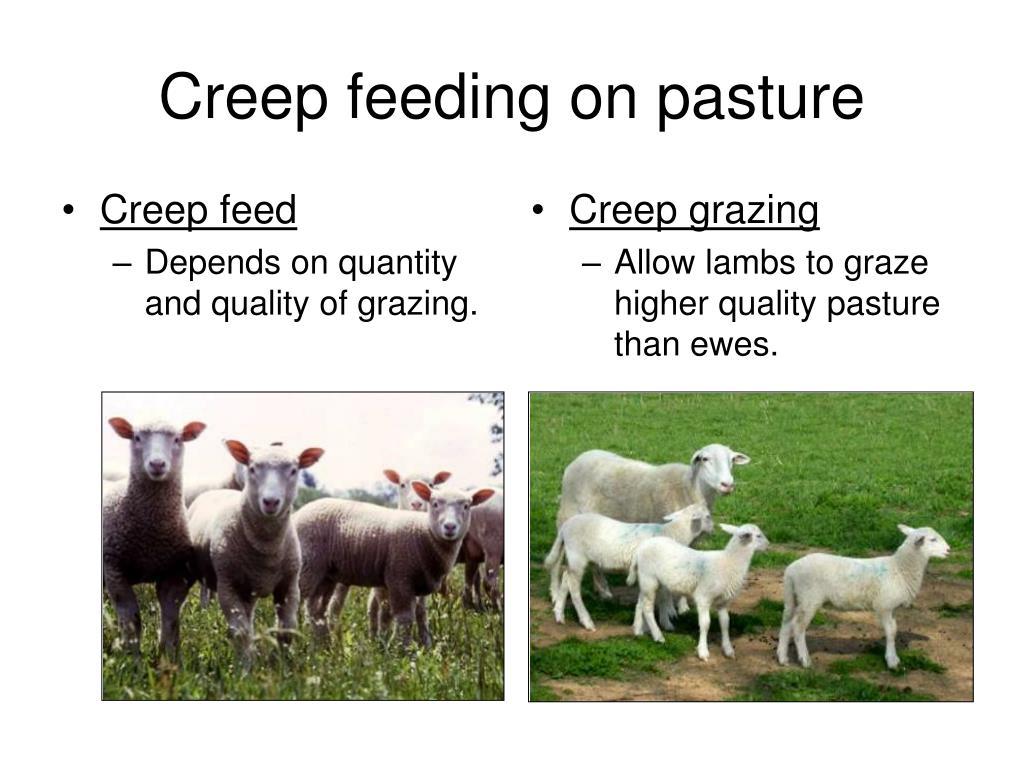 Creep feed