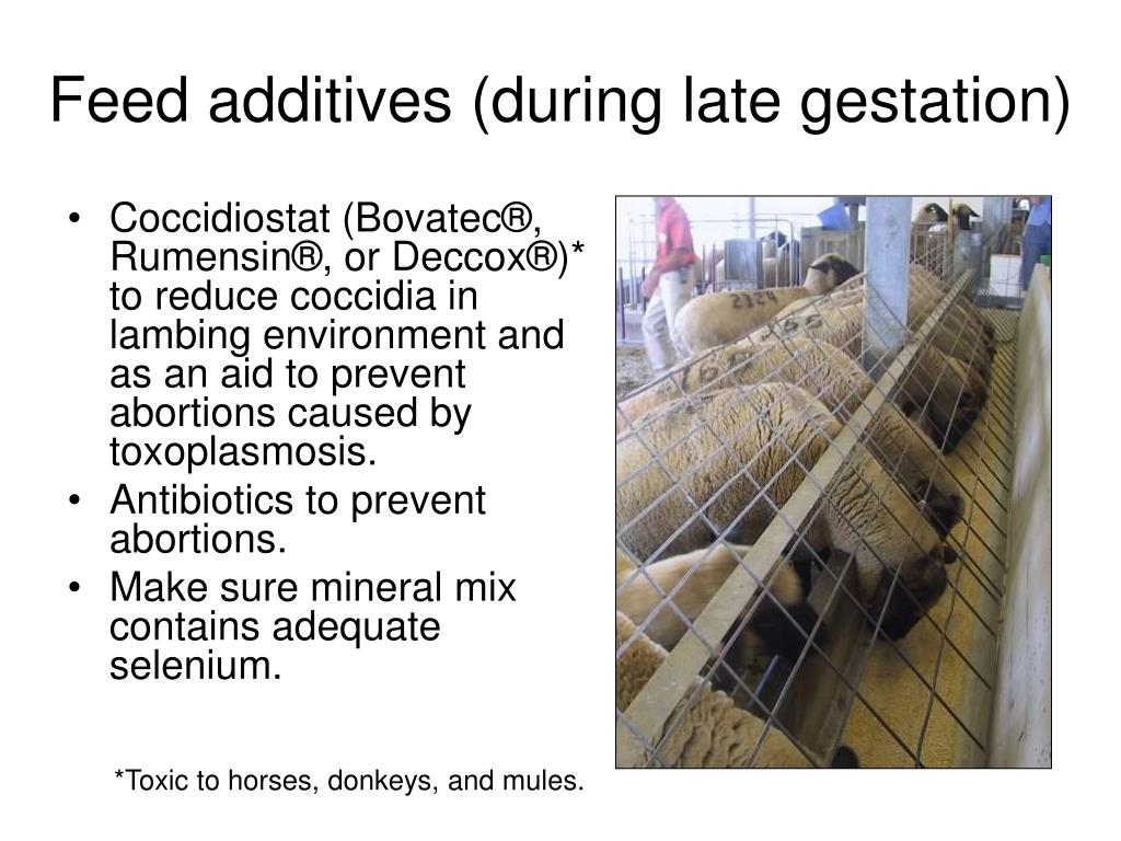 Feed additives (during late gestation)