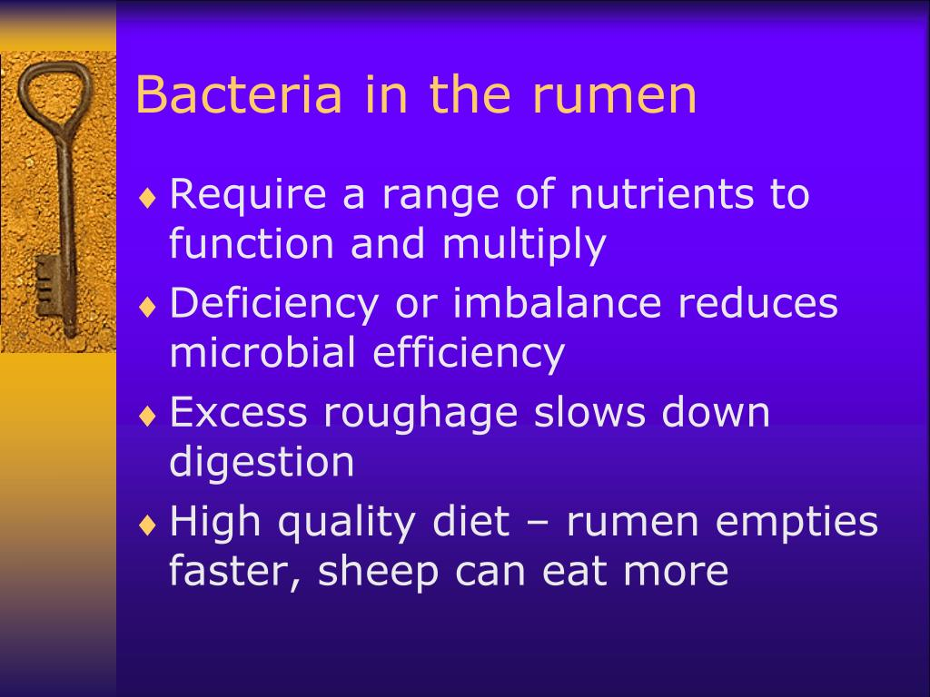 Bacteria in the rumen