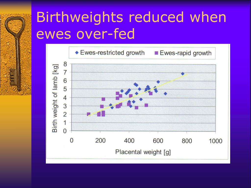 Birthweights reduced when ewes over-fed