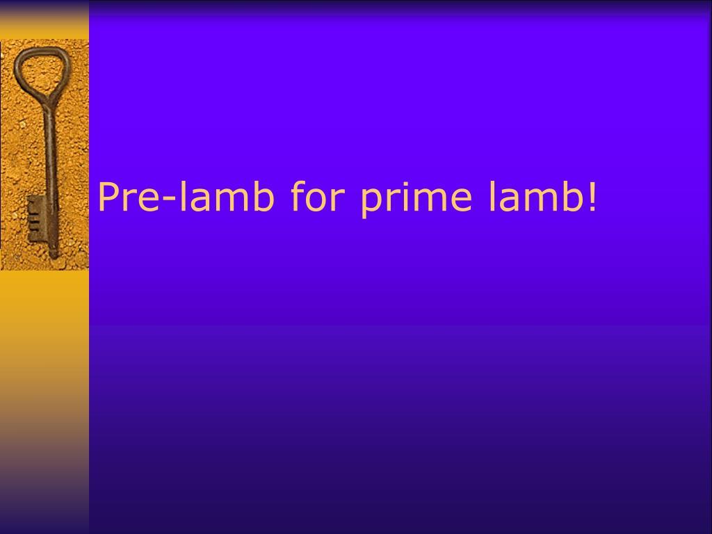 Pre-lamb for prime lamb!