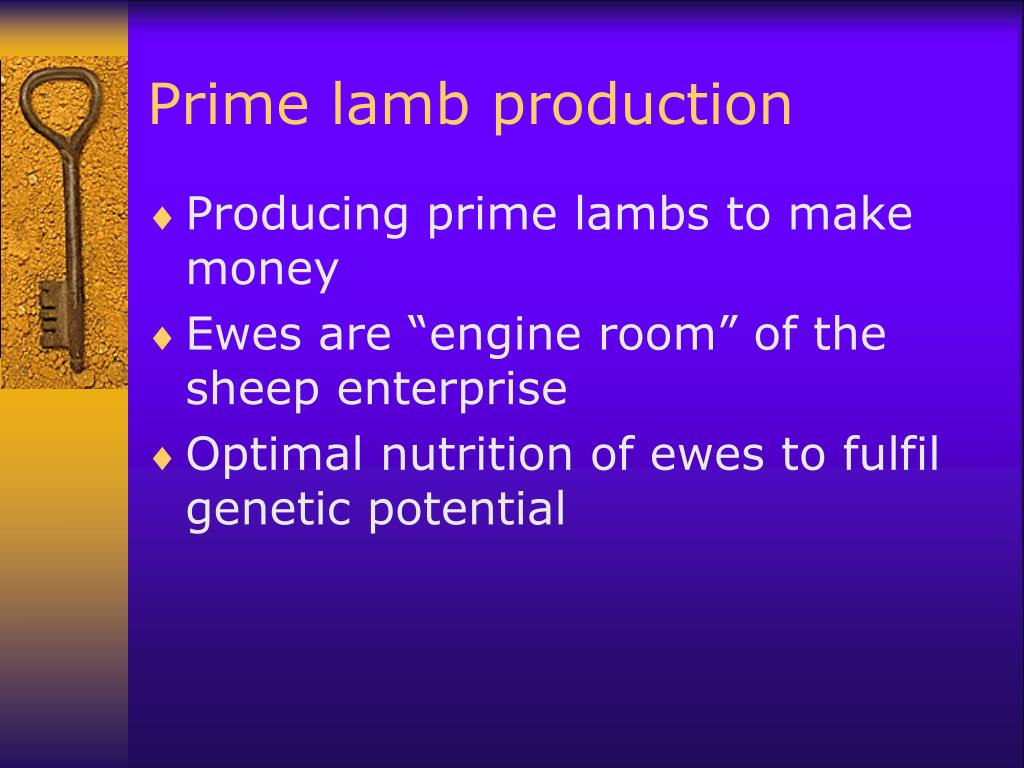 Prime lamb production