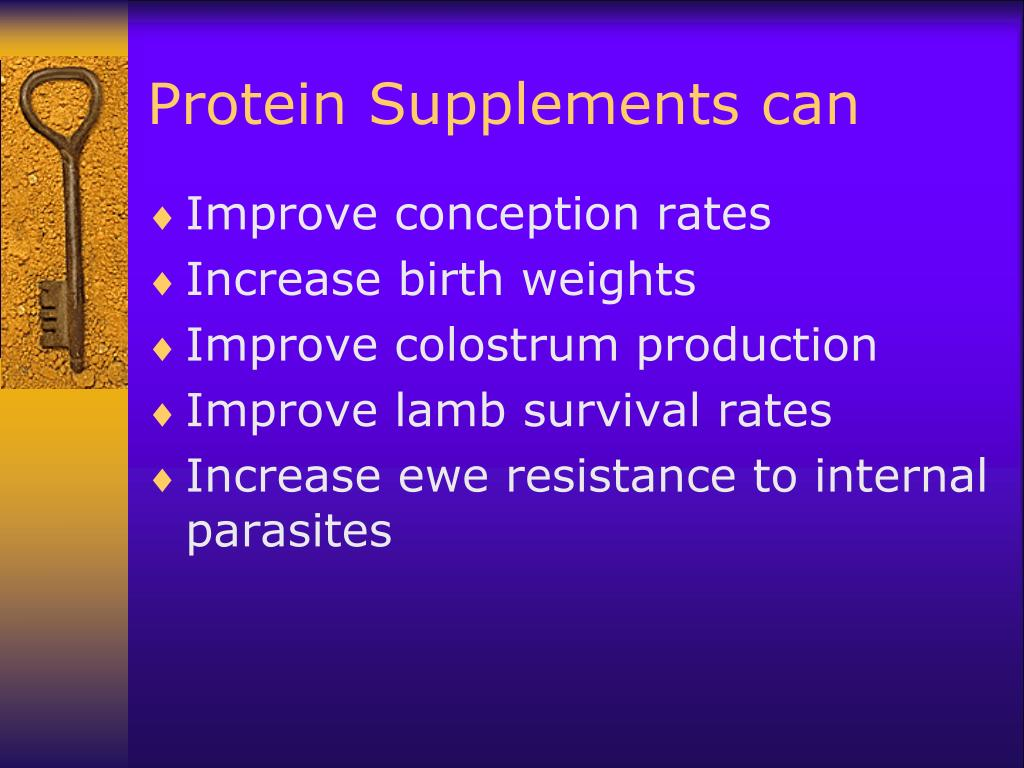 Protein Supplements can