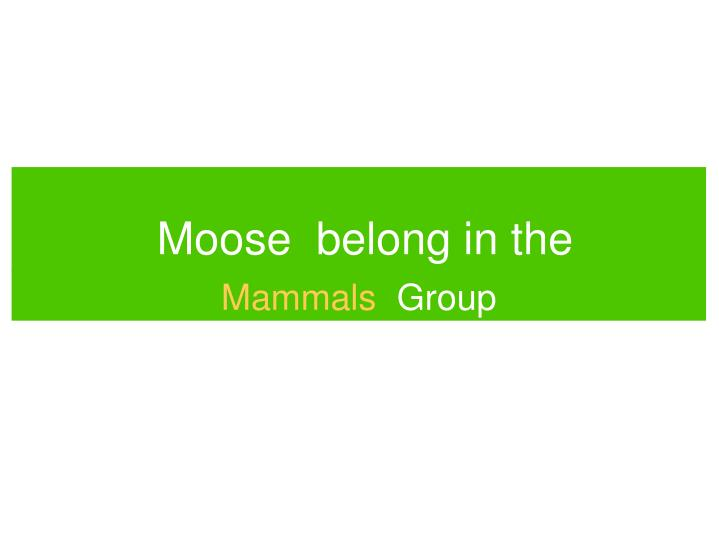 Moose belong in the