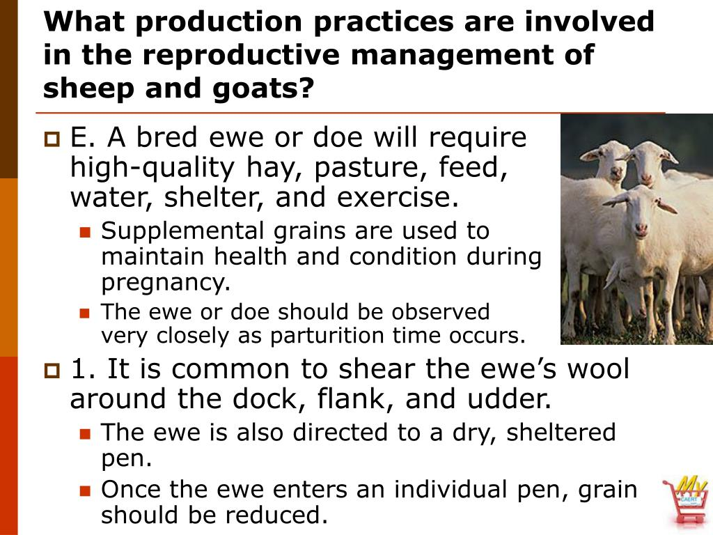 What production practices are involved in the reproductive management of sheep and goats?