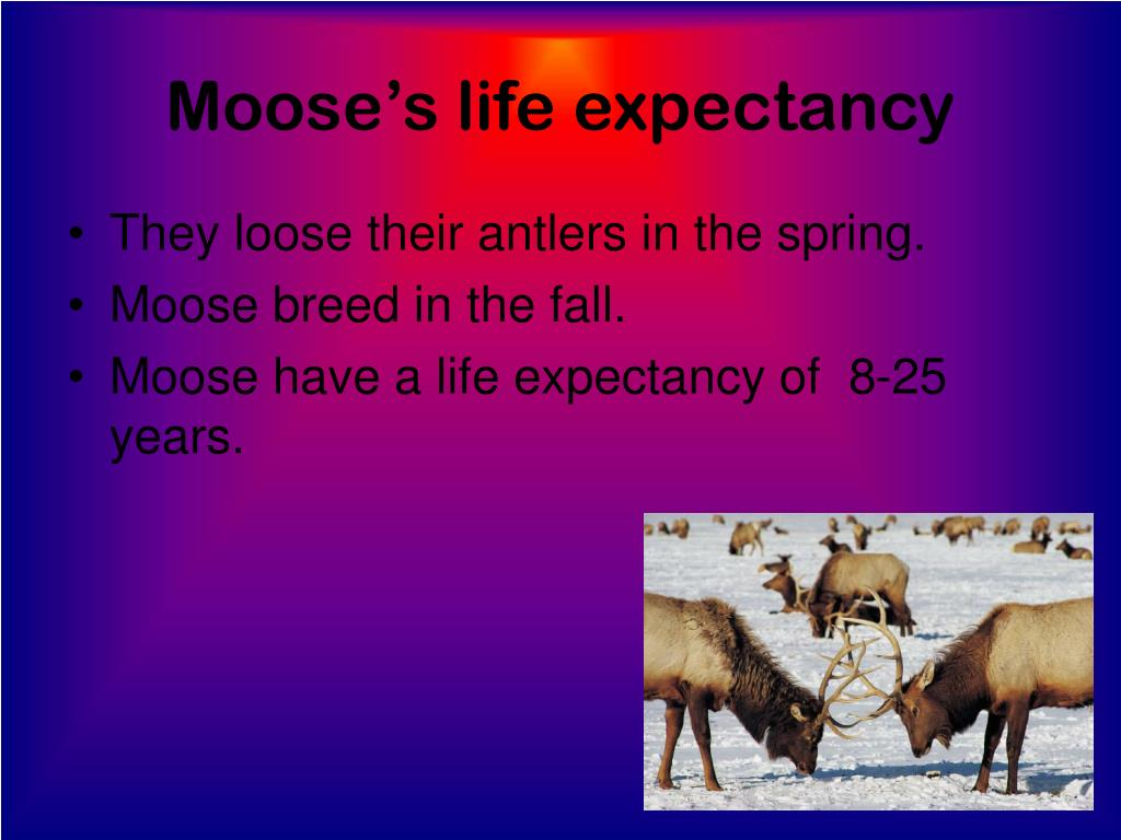 Moose's life expectancy
