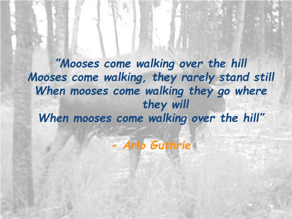 """Mooses come walking over the hill"