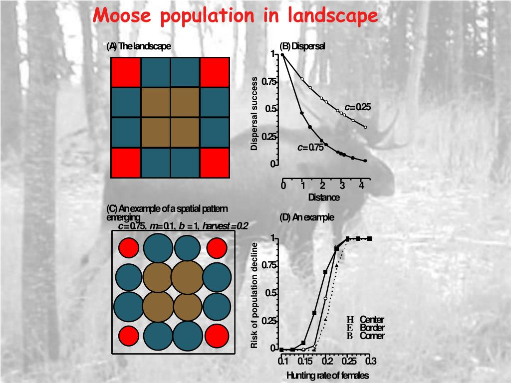 Moose population in landscape