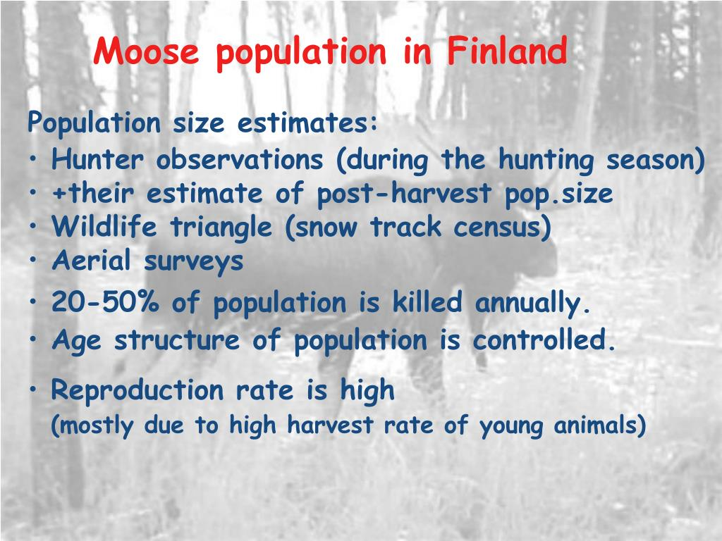 Moose population in Finland