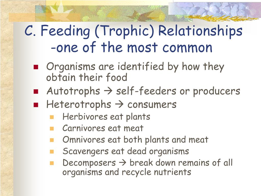 C. Feeding (Trophic) Relationships