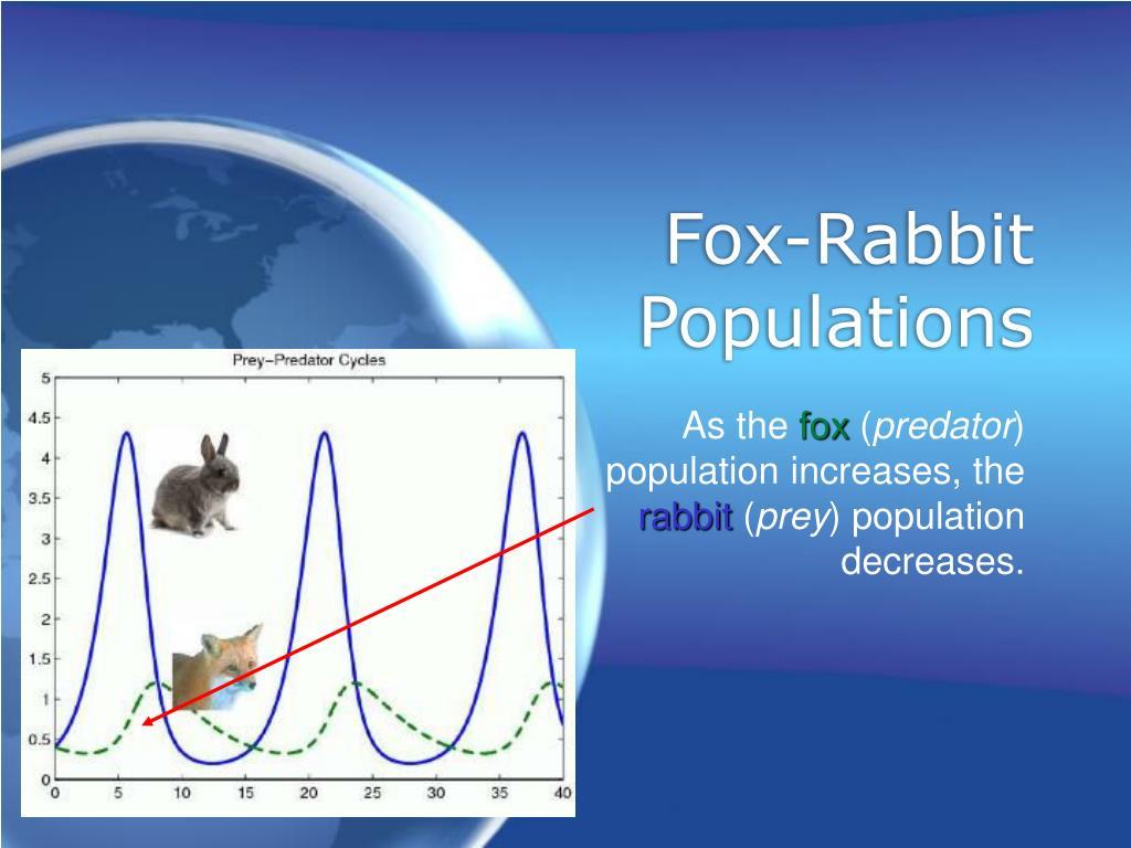 Fox-Rabbit