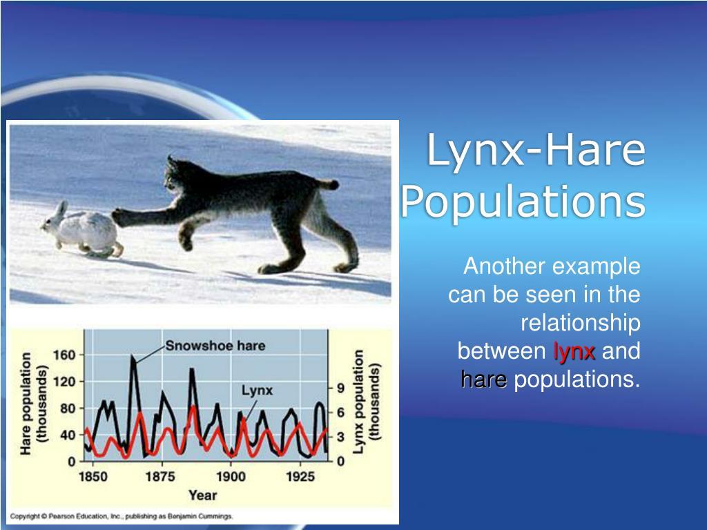 Lynx-Hare