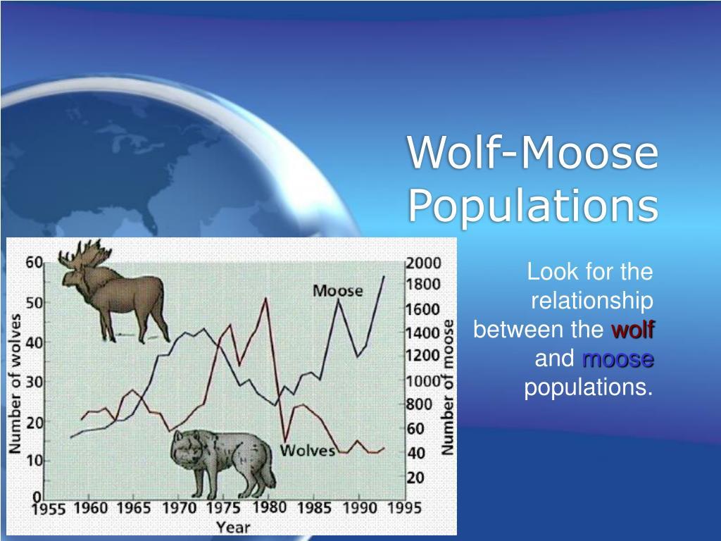 Wolf-Moose