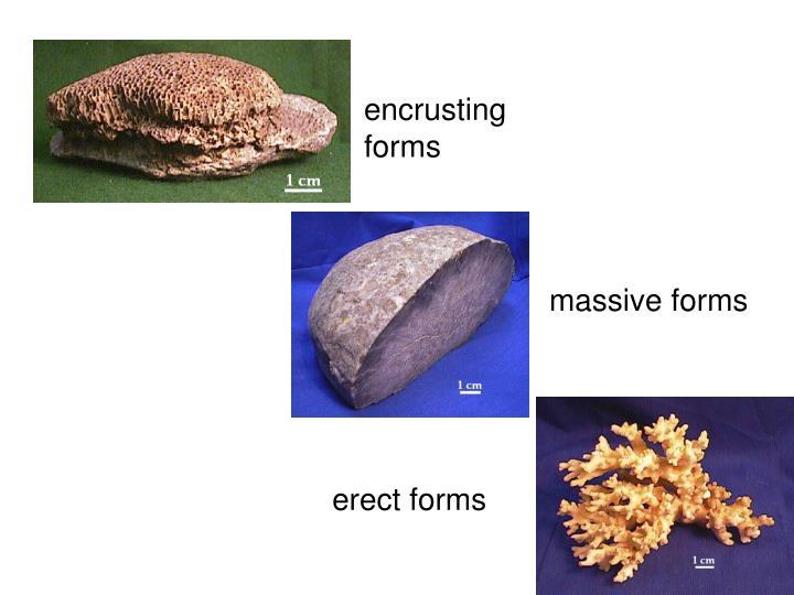 encrusting forms
