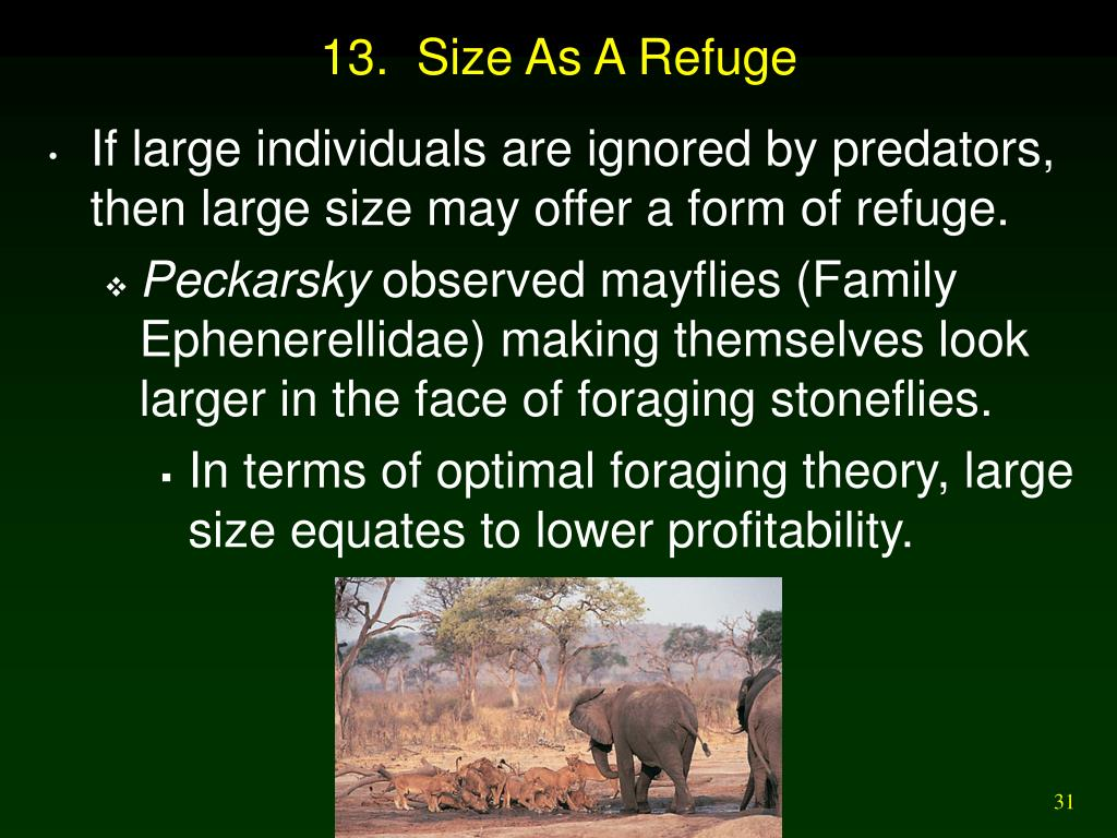 13.  Size As A Refuge