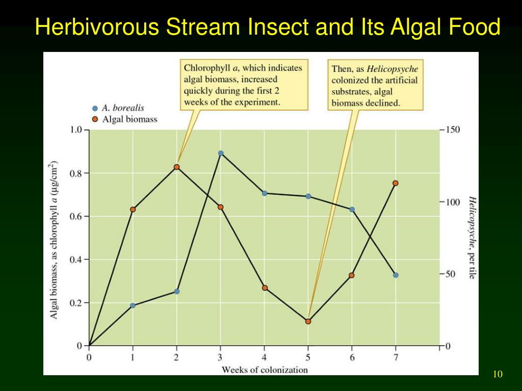 Herbivorous Stream Insect and Its Algal Food