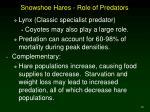 snowshoe hares role of predators