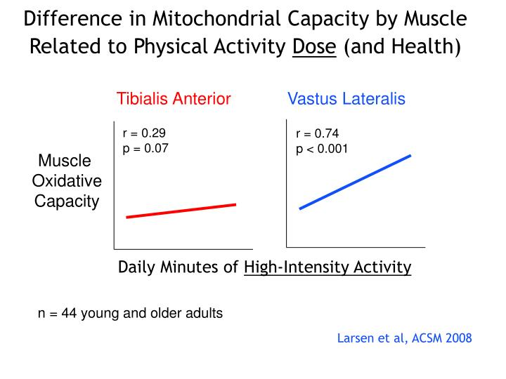 Difference in Mitochondrial Capacity by Muscle Related to Physical Activity