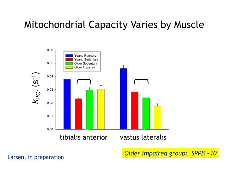 Mitochondrial Capacity Varies by Muscle