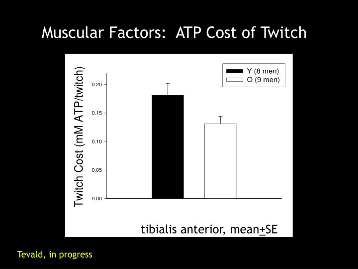 Muscular Factors:  ATP Cost of Twitch