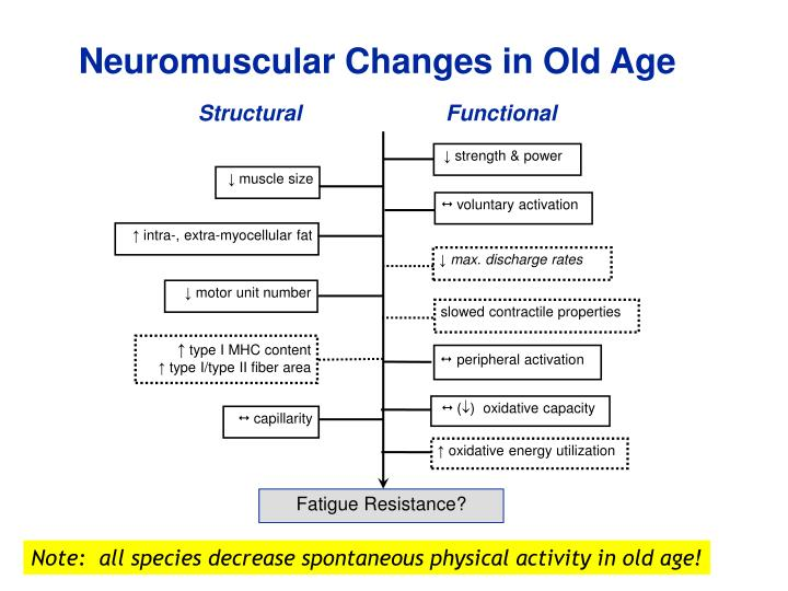 Neuromuscular Changes in Old Age