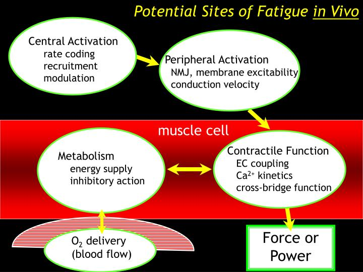 Potential Sites of Fatigue