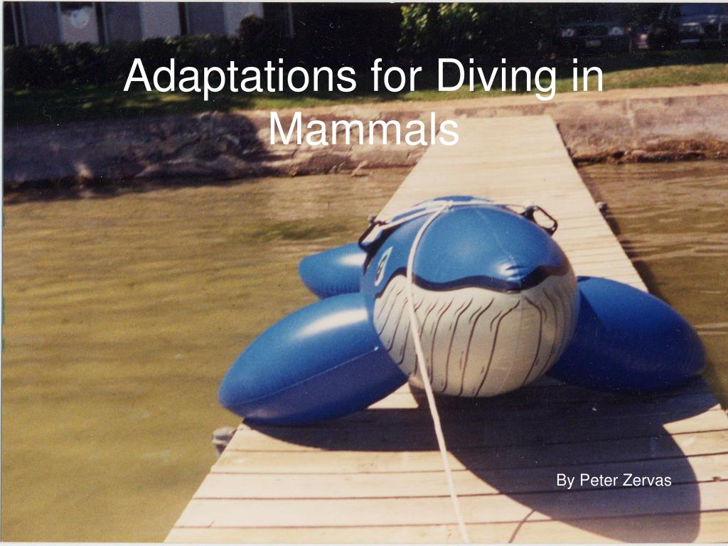 Adaptations for Diving in Mammals