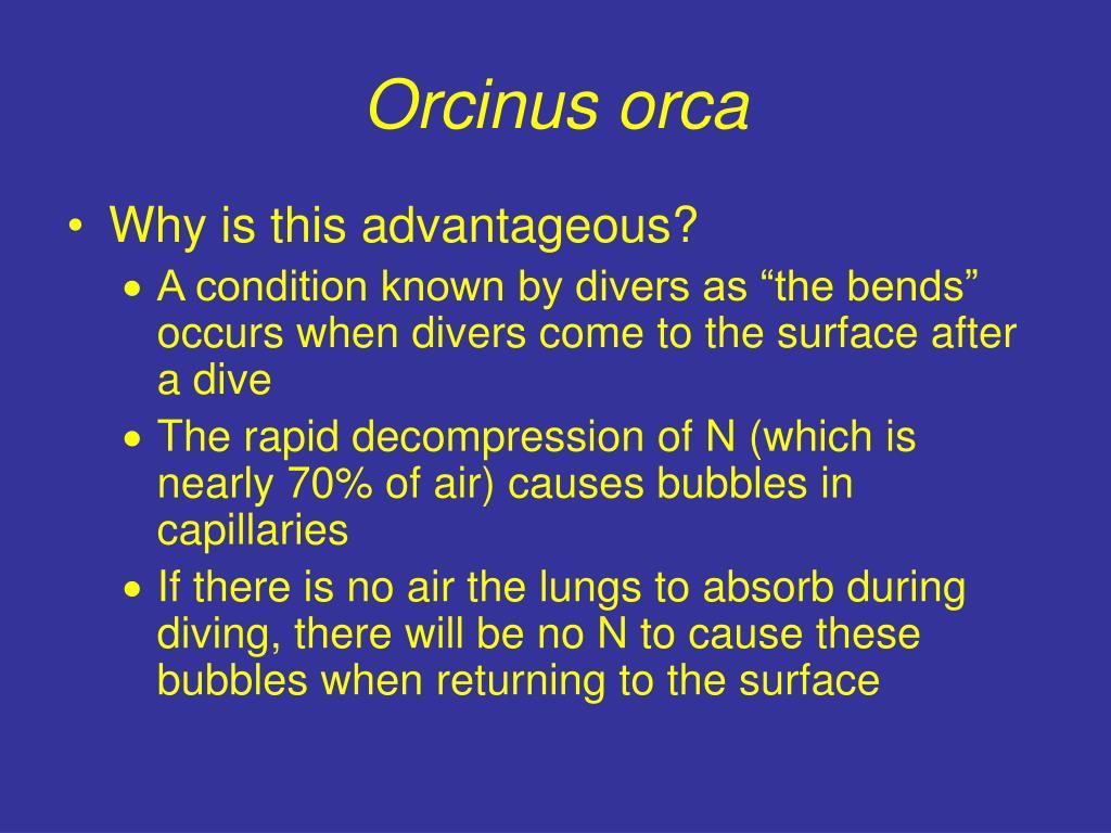 Orcinus orca
