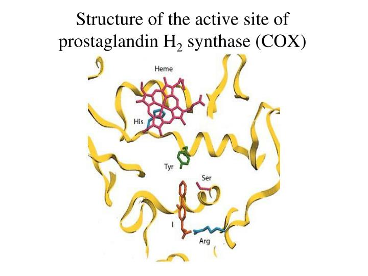 Structure of the active site of prostaglandin H