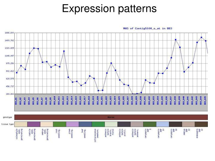Expression patterns