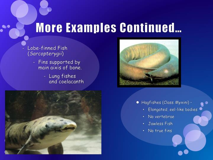 The characteristics of coelacanth a family of bony fishes