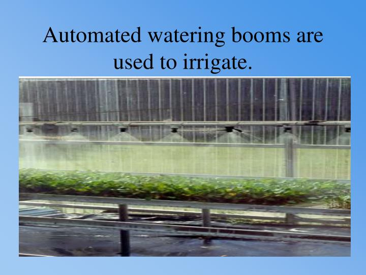 Automated watering booms are used to irrigate.