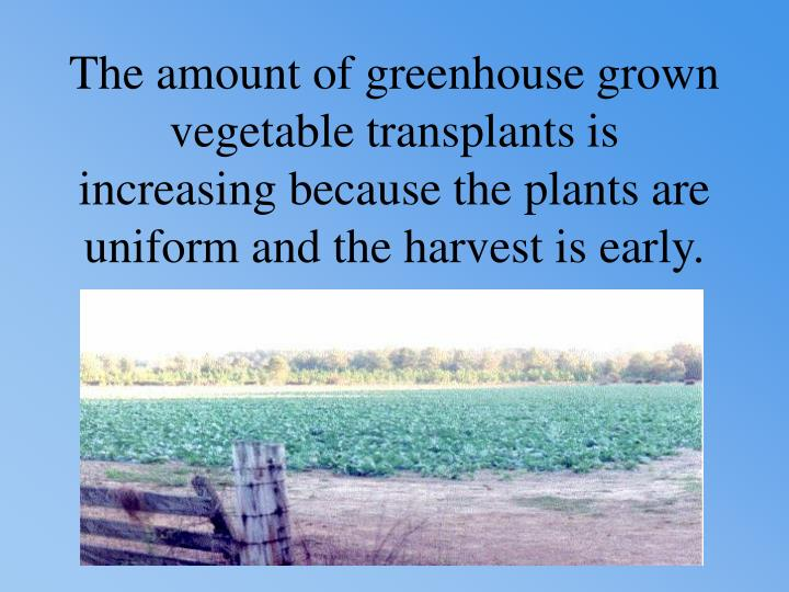 The amount of greenhouse grown vegetable transplants is increasing because the plants are uniform and the harvest is early.