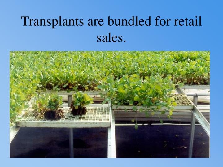 Transplants are bundled for retail sales.