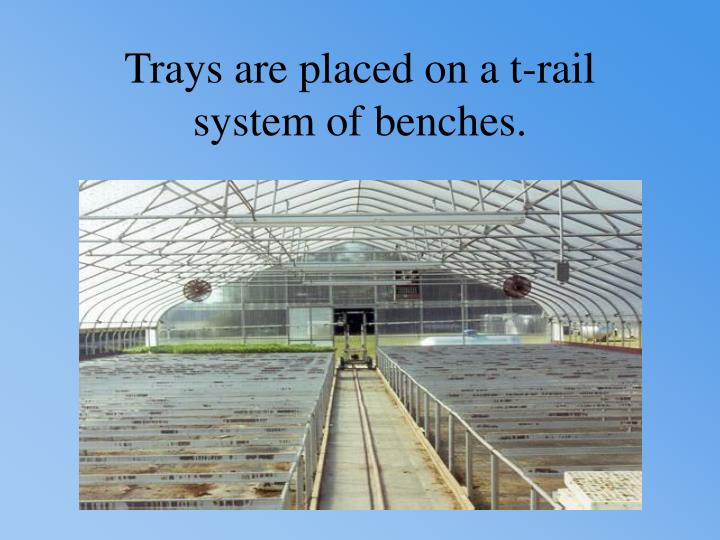 Trays are placed on a t-rail system of benches.