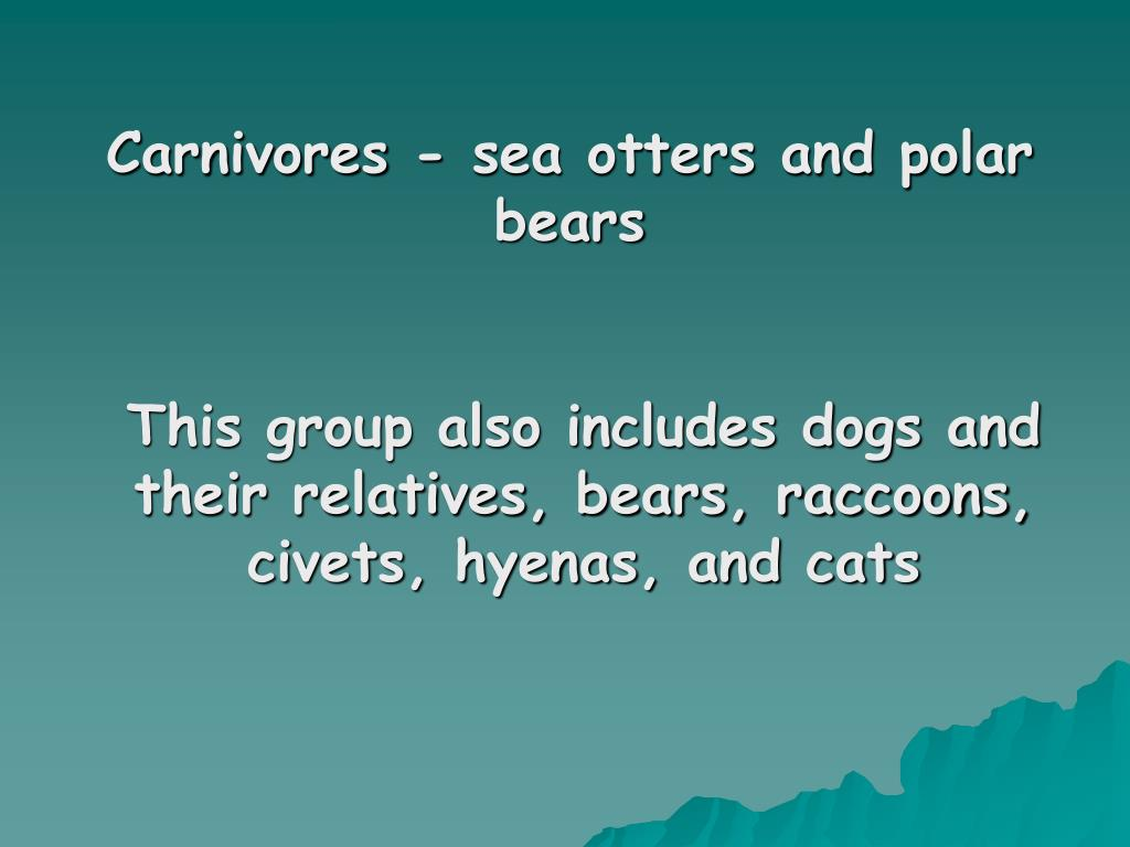 Carnivores - sea otters and polar bears