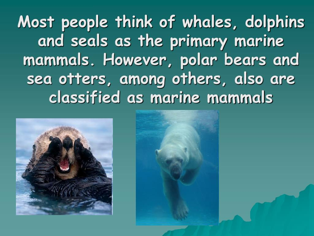 Most people think of whales, dolphins and seals as the primary marine mammals. However, polar bears and sea otters, among others, also are classified as marine mammals