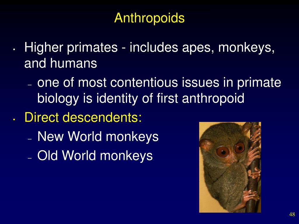 Anthropoids
