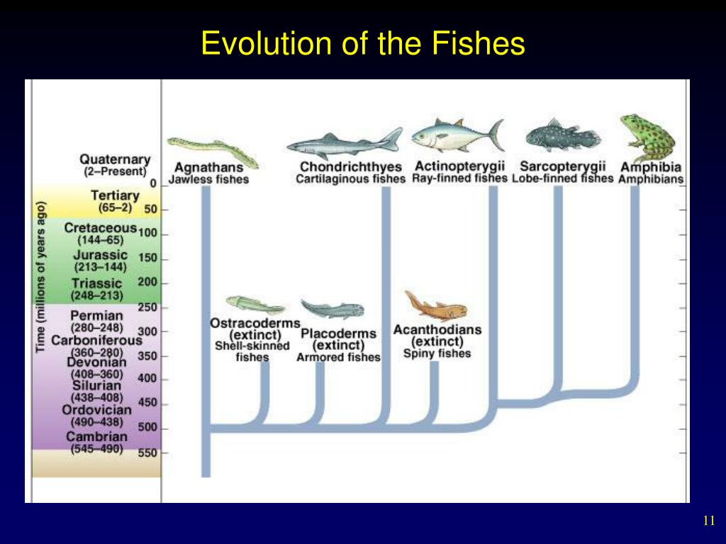Evolution of the Fishes