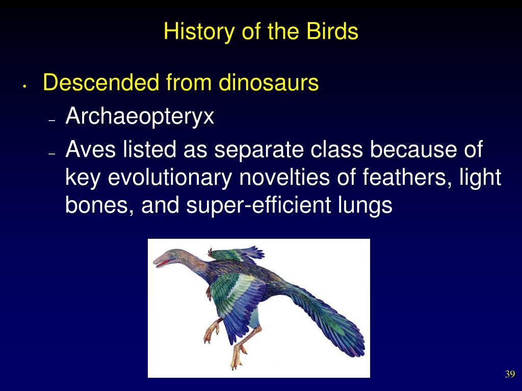 History of the Birds